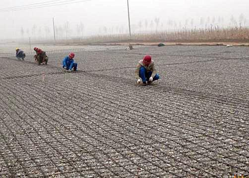 The Treatment of Soft Subgrade with Geogrid